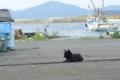 [宮城県]田代島23/20100818 100818_161702 海と黒猫