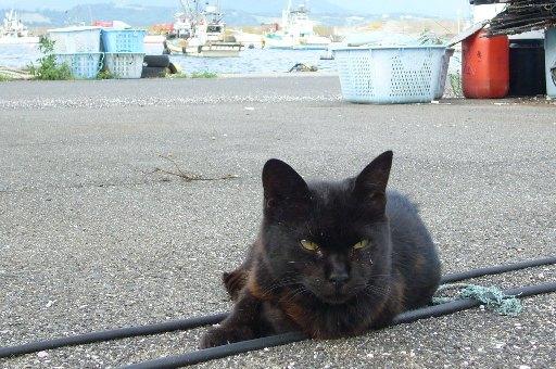 田代島24/20100818 100818_1618 海の男