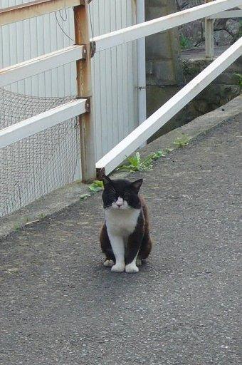 田代島27/20100818