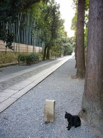 大徳寺/20080916  080916_1747 進むべき道はひとつ