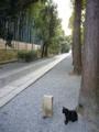 [京都府]大徳寺/20080916  080916_1747 進むべき道はひとつ