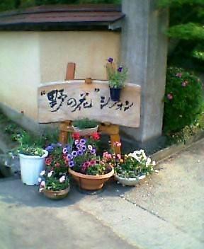 野の花シフォン