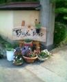 [2003]野の花シフォン