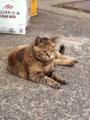 猫 201306061750