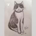 [2017][#mydrawing][一日一猫絵][猫絵][catdrawing]17018/170131