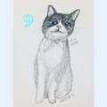 [2017][#mydrawing][一日一猫絵][猫絵][catdrawing]17015/170211