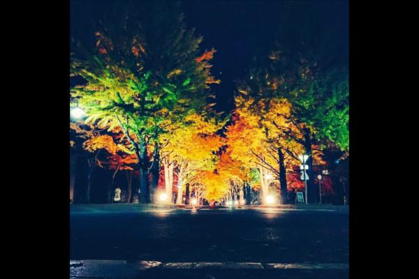 ライトアップされた銀杏並木