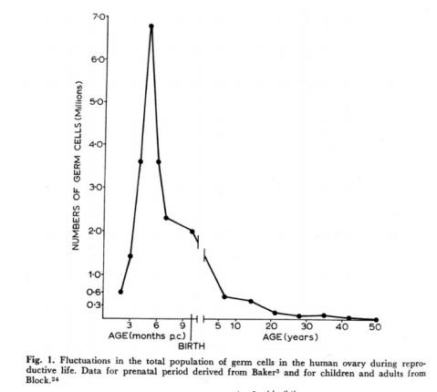 図3: 女性の年齢と生殖細胞の数