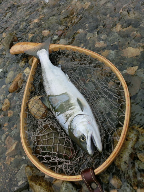 f:id:remember_the_trout:20150509080618j:plain