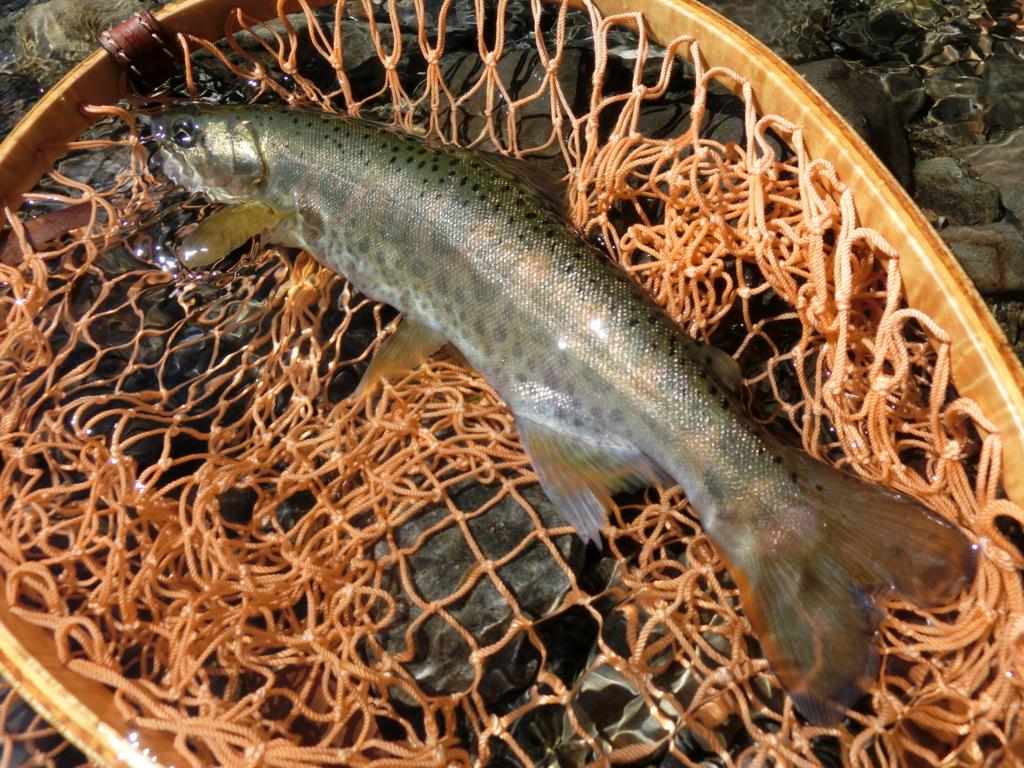 f:id:remember_the_trout:20160321135409j:plain