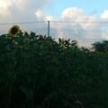 [twitter] Photo:はてなFotolifeへの投稿 「過ぎゆく夏2012'  vol.1」