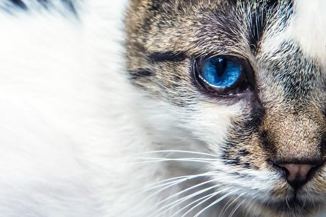 外見の優れた猫