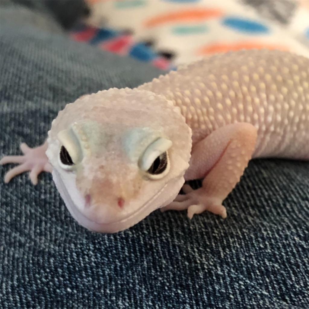 f:id:reptiles216:20190122021742j:image