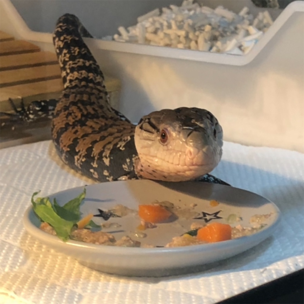 f:id:reptiles216:20190122034306j:image
