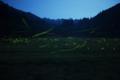 [ホタル]PLANAR 50mm f1.4 休耕田を自在に舞うゲンジホタルたち。
