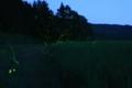 [ホタル]PLANAR 50mm f1.4 田園を舞うヘイケホタルたち。