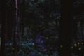 [ホタル] Planar 50mm f1.4 森を行き交うヒメボタル