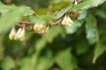 神鍋山の植物