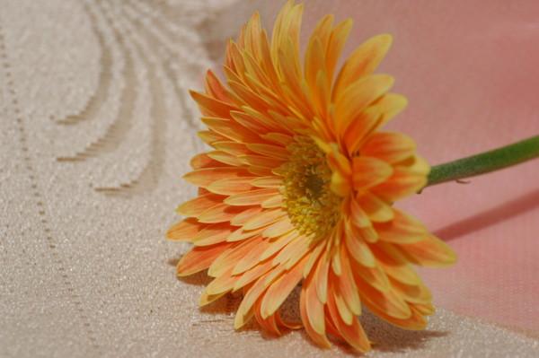 f:id:retoto:20090104225207j:image