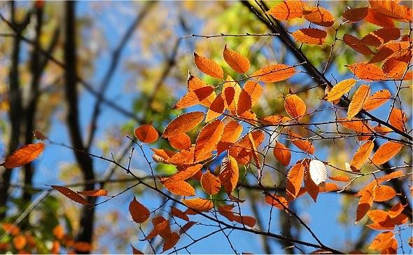 f:id:retoto:20101105221520j:image