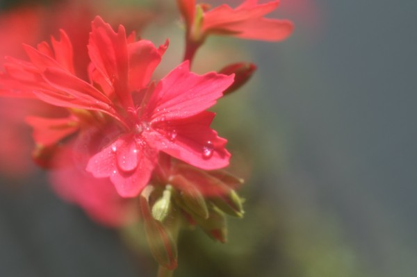 f:id:retoto:20110610204503j:image