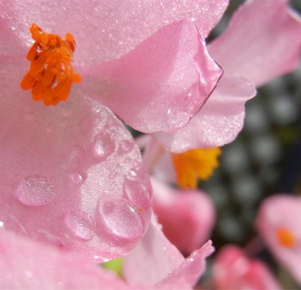 f:id:retoto:20110622195539j:image