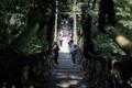 [風景] 京都新聞写真コンテスト 大歩危峡・かずら橋