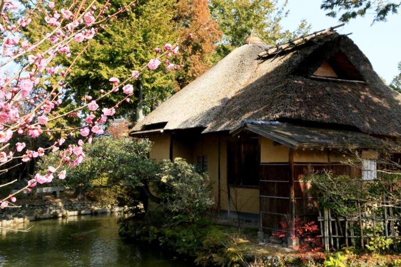 京都新聞写真コンテスト 春の日差し