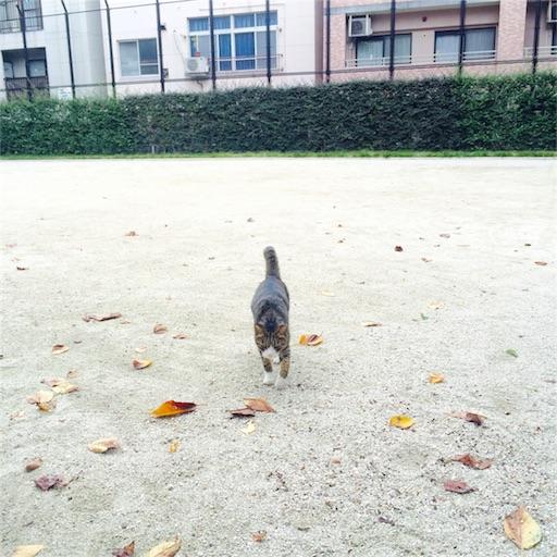 f:id:rezuteki-tsunatan-0909:20161026124402j:image