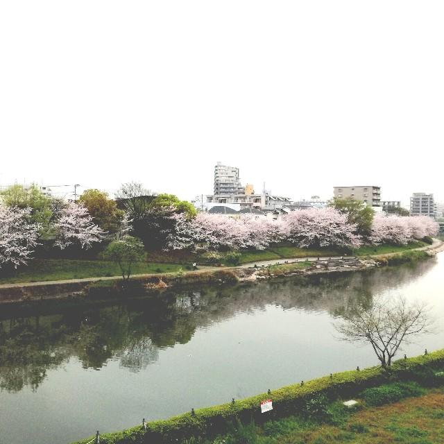 f:id:rezuteki-tsunatan-0909:20170408180857j:image