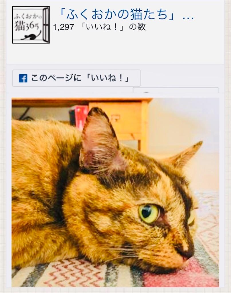 f:id:rezuteki-tsunatan-0909:20201228113047j:image