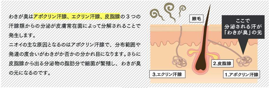 f:id:rgb-yokosuka:20190518192652p:plain