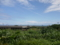 石垣島の風景④