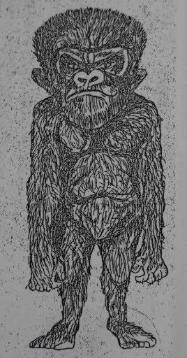 未確認の類人猿ヒバゴンの想像図