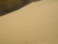 [カイロ]枯山水