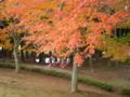 [稲葉山]紅葉