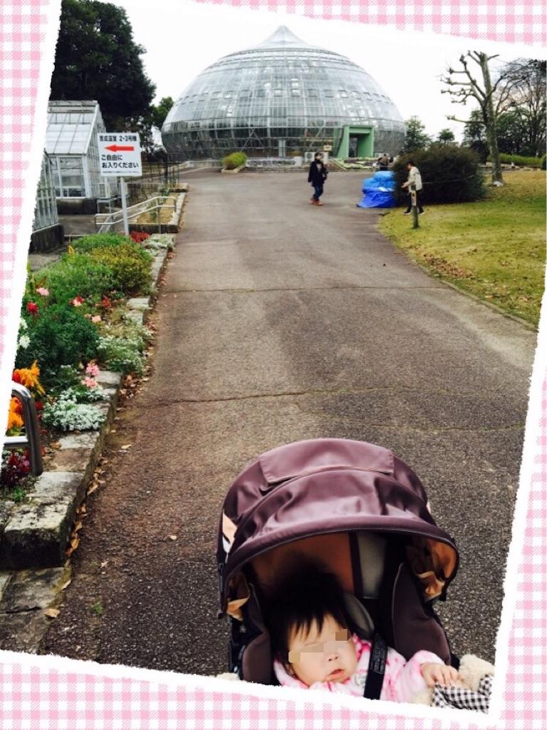 f:id:ribon-takara:20161204231526j:image