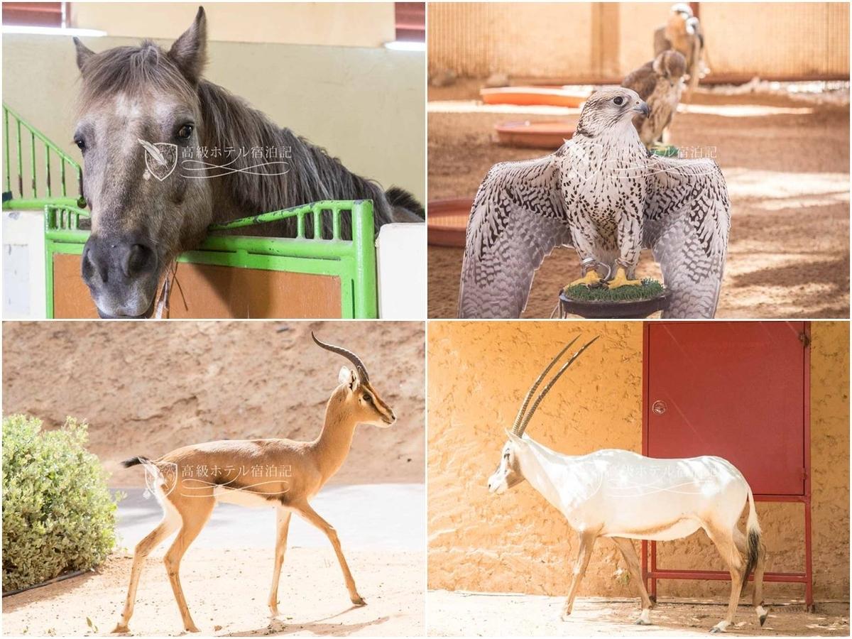 オリックスが放し飼いされている他、馬、鷲、ふくろうをはじめ多くの動物が飼育されている。厩舎を見学したときは一頭の馬が超キレてて迫力満点でした(笑)。