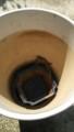 植木鉢の中のトカゲ