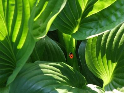 加湿器の代わりに観葉植物