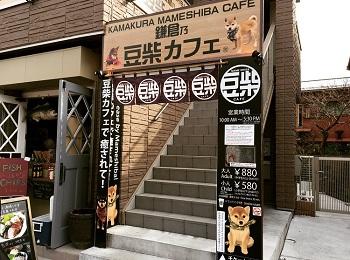 癒し観光スポット「鎌倉乃豆柴カフェ」