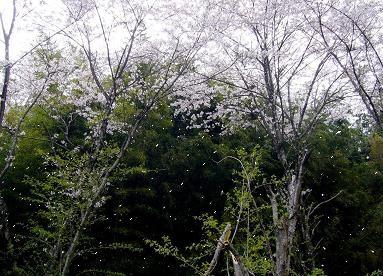 f:id:rieko-k:20080414134503j:image