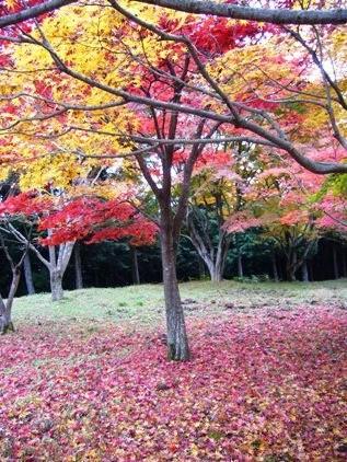 f:id:rieko-k:20081117144743j:image:left