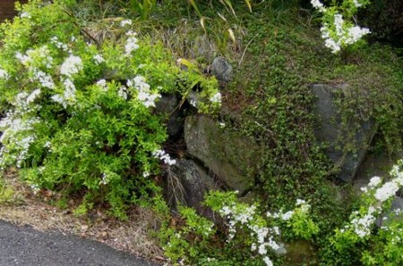 f:id:rieko-k:20100401104301j:image