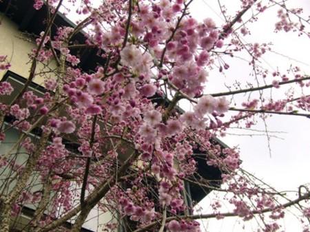 f:id:rieko-k:20100402144903j:image