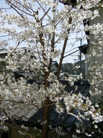 f:id:rieko-k:20100404124445j:image