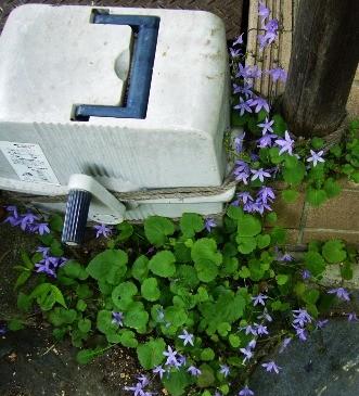 f:id:rieko-k:20100603105026j:image