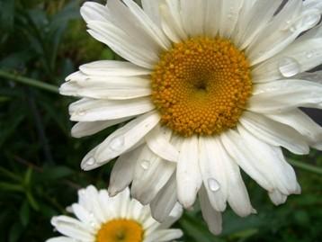 f:id:rieko-k:20100622122047j:image:right