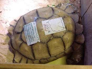 f:id:rieko-k:20101212153245j:image:left