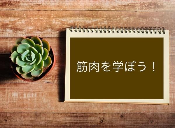 f:id:riekosannoblog:20190302114939j:plain